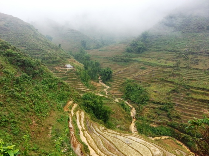 Hmong 3